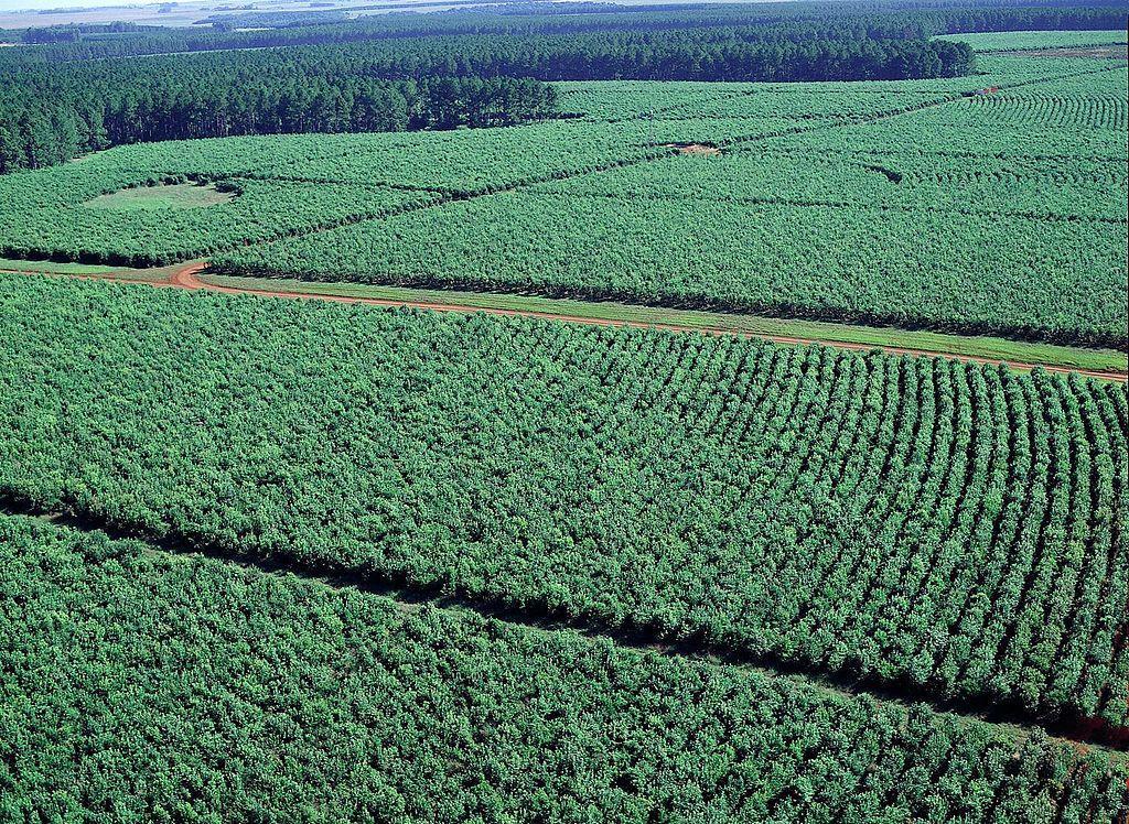 India anunció que abre su mercado para la exportación de yerba mate argentina