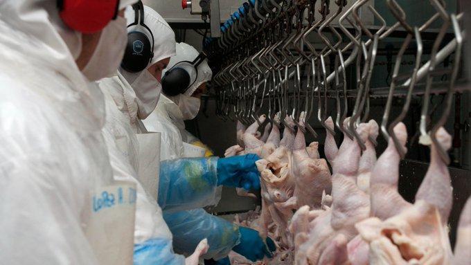 Covid + Brasil: las exportaciones avícolas cayeron 20 %