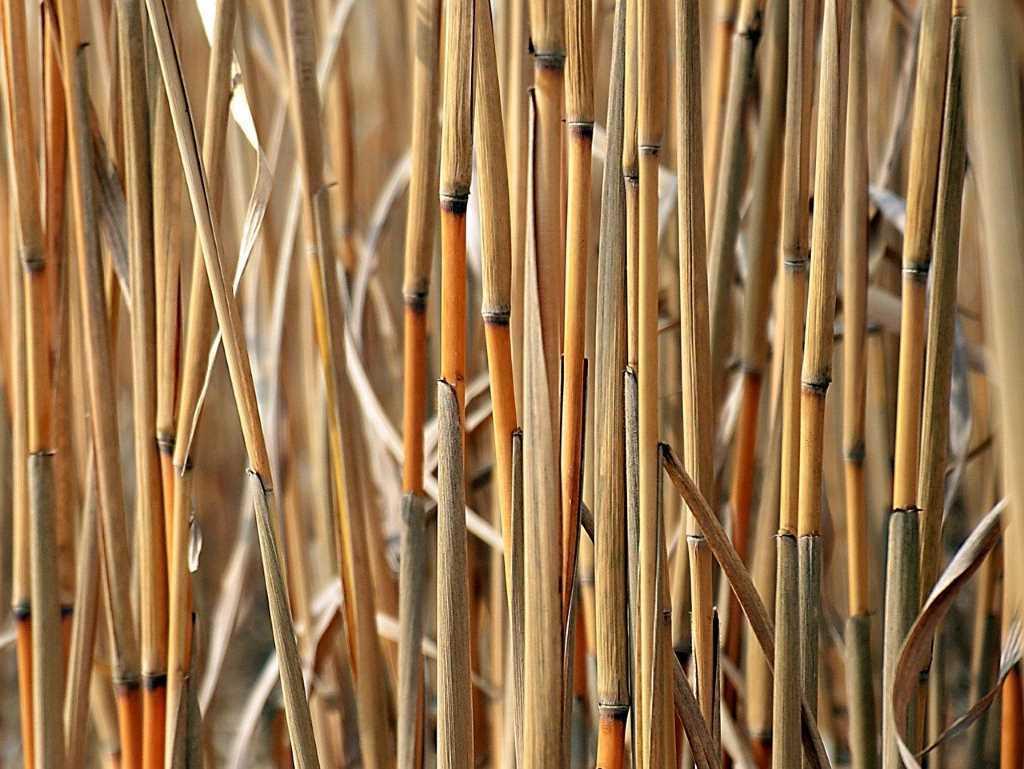 Desigual recuperación de la producción de biodiésel y bioetanol